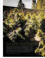 Part One of a feature on cannabis growing in California's Sierras